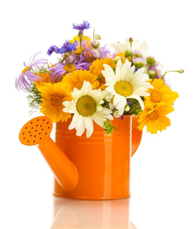 mixed flower bouquet: beautiful bouquet of bright  wildflowers in watering can, isolated on white