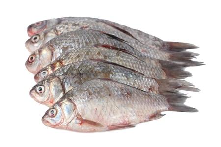 cichlidae: Fresh fishes isolated on white