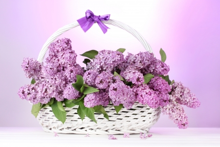 beautiful lilac flowers in basket on purple background Stock Photo - 13922865