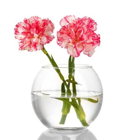 Beautiful carnations transparent vase isolated on white Stock Photo - 13901402