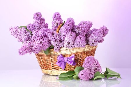 beautiful lilac flowers in basket on purple background Stock Photo - 13944595
