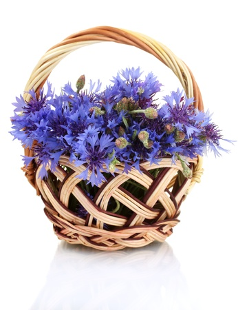 cornflowers in basket isolated on white photo