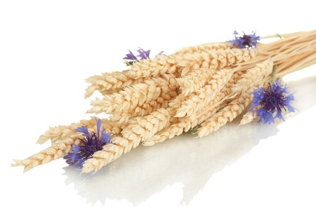 ears of wheat and cornflower isolated on white photo