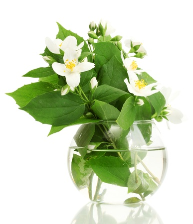 beautiful jasmine flowers in vase isolated on white photo