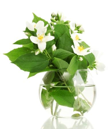 jasmine: beautiful jasmine flowers in vase isolated on white