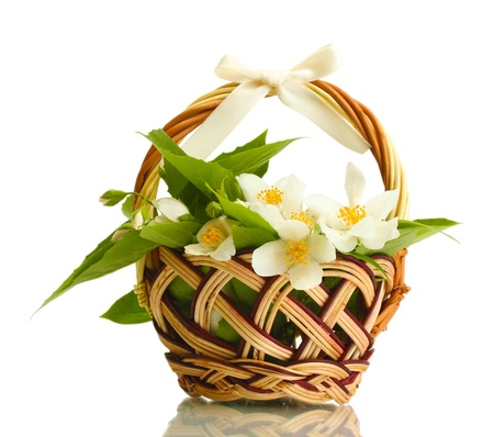 beautiful jasmine flowers with leaves in basket, isolated on white photo