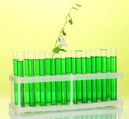 incubate: Test-tubes with a green solution and the plant on yellow background close-up