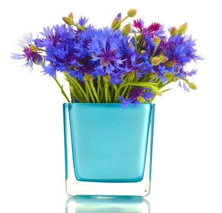 cornflowers in vase isolated on white Stock Photo - 13999887