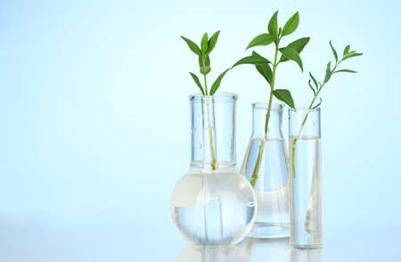 nature protection: Test-tubes with a transparent solution and the plant on blue background close-up