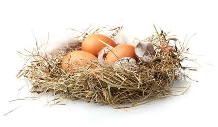 chicken and quail eggs in a nest isolated on white photo