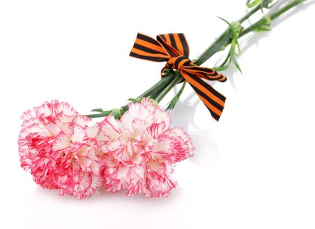 carnations and St. George's ribbon isolated on white Stock Photo - 13999488