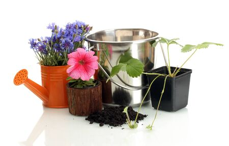 watering can, bucket, and plants in flowerpot isolated on white photo