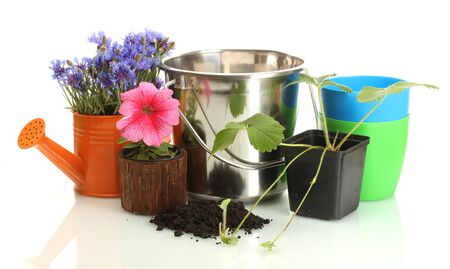 watering can, bucket, tools and plants in flowerpot isolated on white photo