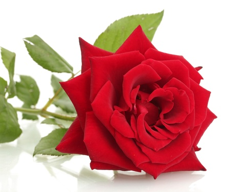 beautiful red rose isolated on white Stock Photo - 14063051