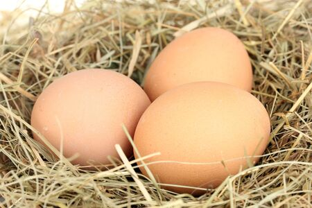brown eggs in a nest of hay on white background close-up photo