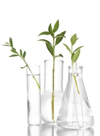 Tubos de ensayo con una solución transparente y la planta aisladas sobre fondo blanco close-up