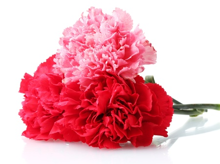 Bouquet of carnations isolated on white photo