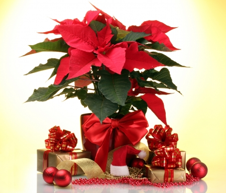 beautiful poinsettia in flowerpot, New Years balls and gifts on yellow background photo