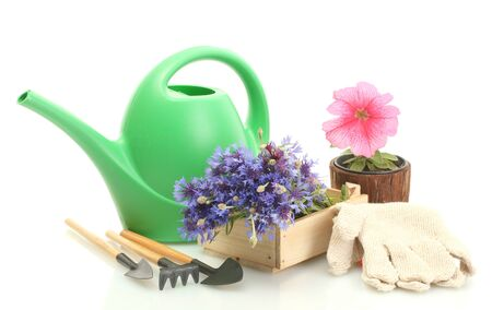 watering can, tools and flowers isolated on white photo