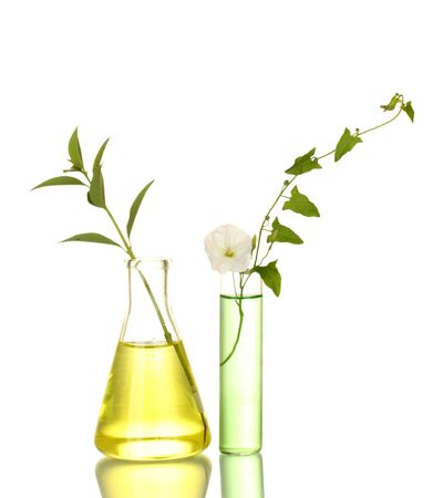 test-tubes with a colorful solution and plant isolated on white close-up Stock Photo - 14077053