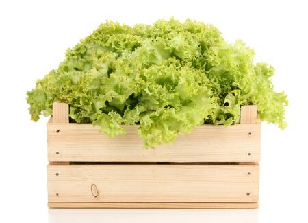 Fresh lettuce in crate isolated on white photo