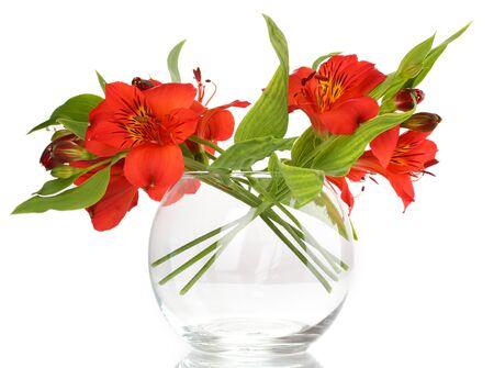Alstroemeria in vase isolated on white photo