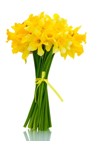 beautiful bouquet of yellow daffodils isolated on white photo