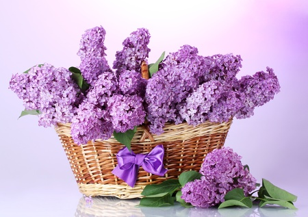 beautiful lilac flowers in basket on purple background Stock Photo - 14111311