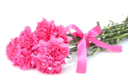 Beautiful pink carnations isolated on white Stock Photo - 14110402