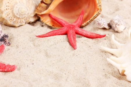 Seashells and starfish on sand close-up photo