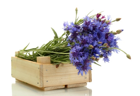 cornflowers in wooden box isolated on white photo