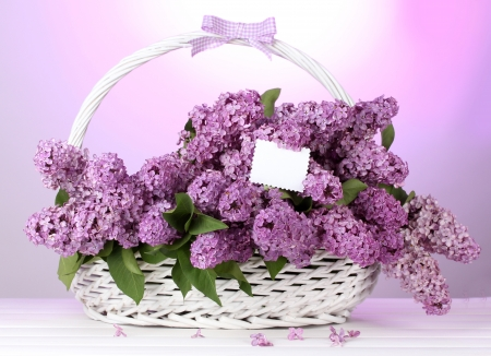 beautiful lilac flowers in basket on purple background Stock Photo - 14182328