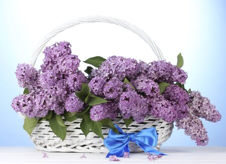 beautiful lilac flowers in basket on blue background Stock Photo - 14182291