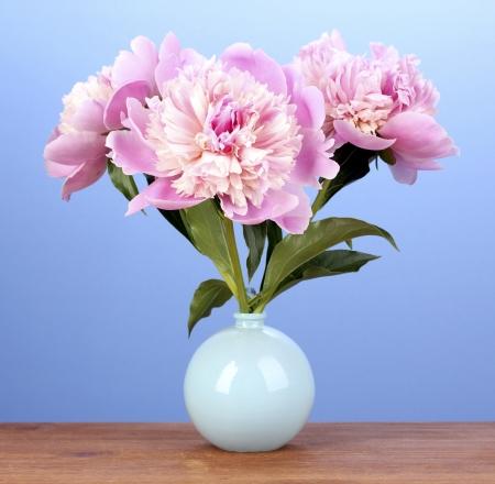 Trois pivoines roses dans un vase sur la table en bois sur fond bleu