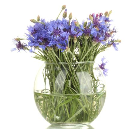 cornflowers in glass vase isolated on white photo