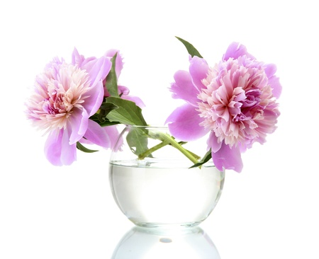 pink peonies flowers in vase isolated on white