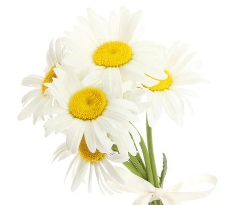 belles fleurs marguerites isolé sur blanc