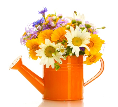 beautiful bouquet of bright  wildflowers in watering can, isolated on white photo