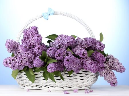 beautiful lilac flowers in basket on blue background Stock Photo - 14292546