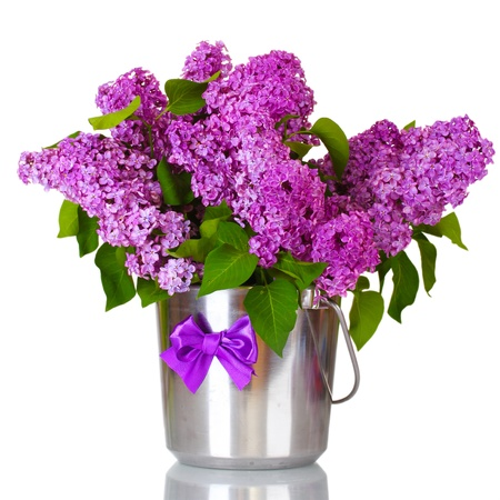 beautiful lilac flowers in metal bucket isolated on white Stock Photo