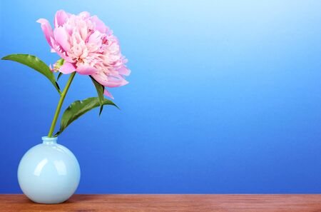 Pink peony in vase on wooden table on blue background photo