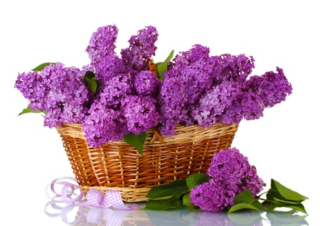 beautiful lilac flowers in basket isolated on white Stock Photo
