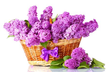 beautiful lilac flowers in basket on purple background Stock Photo - 14354426