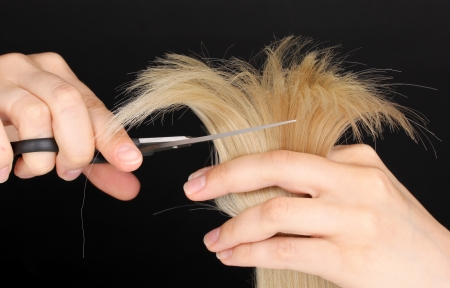 Shiny blond hair in hairdressers hands isolated on black photo