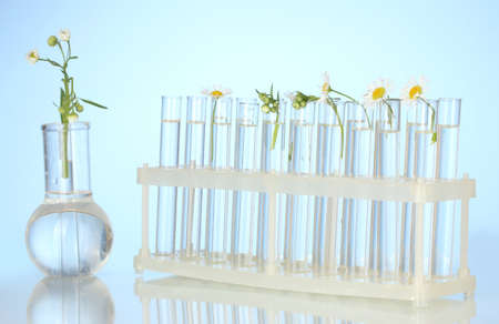 Test-tubes with a transparent solution and the plant on blue background close-up photo