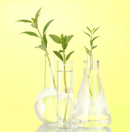 incubate: Test-tubes with a transparent solution and the plant on yellow background close-up