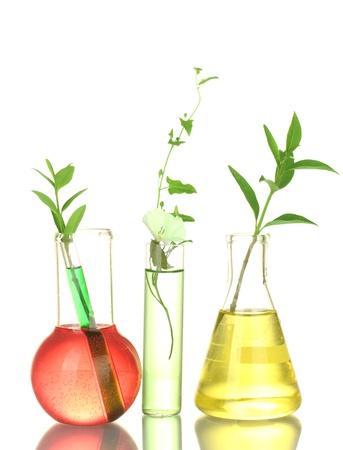 quimica organica: tubos de ensayo con una soluci�n de colorido y plantas aisladas en blanco close-up