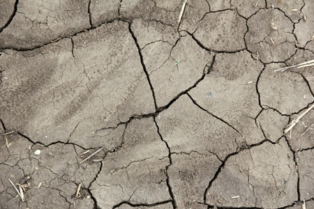 Cracked field soil photo
