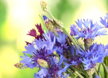 cornflowers on green background photo