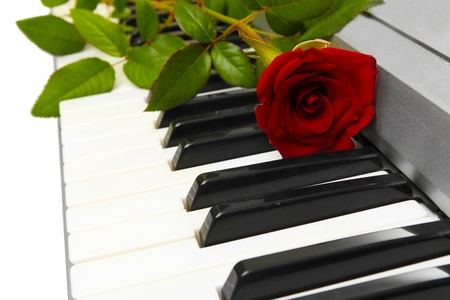 background of synthesizer keyboard with rose Stock Photo - 14368475